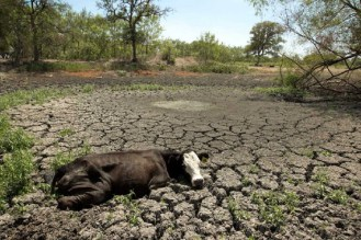 2014-01-05-drought2013earthdrreesehalter2-thumb.jpg